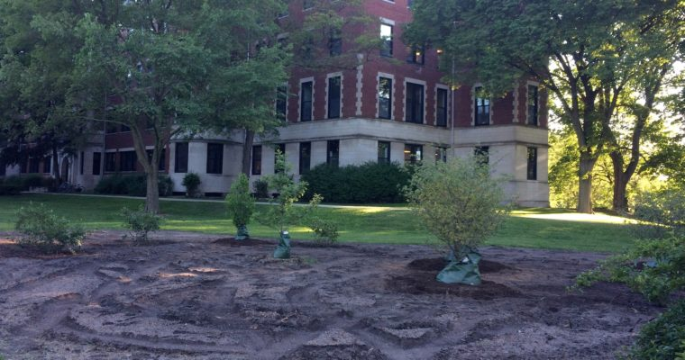 Trees and shrubs are in at the Civic Center garden