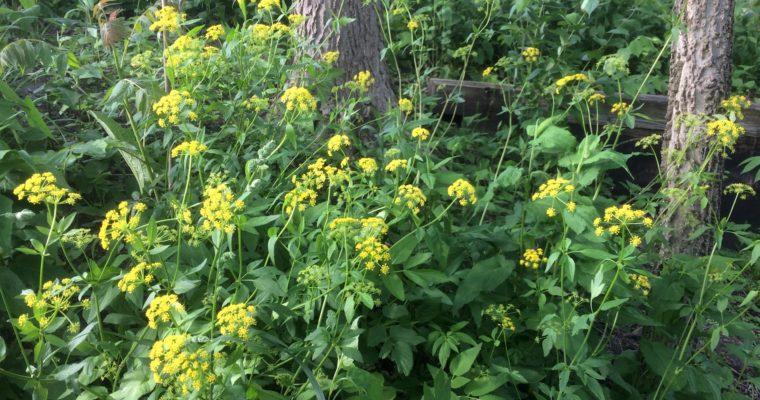 Golden moment in the arboretum