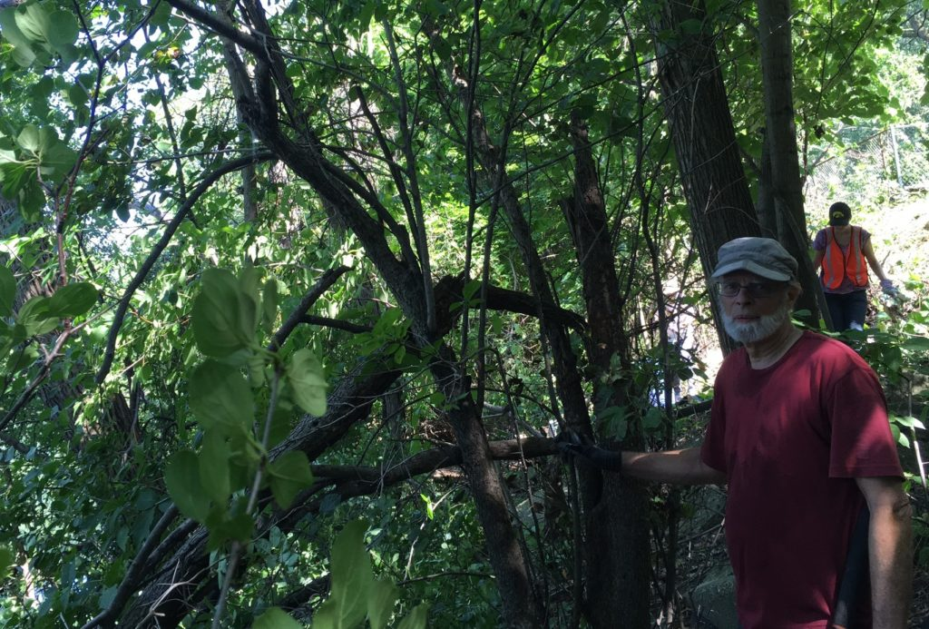 Greg finds a hawthorn under the buckthorn