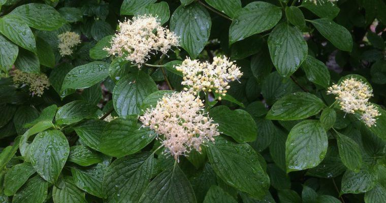 Plant lists for armchair gardeners